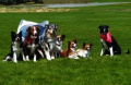 Rocky Mountain Flyball dogs at Stomp, Womp and Wag